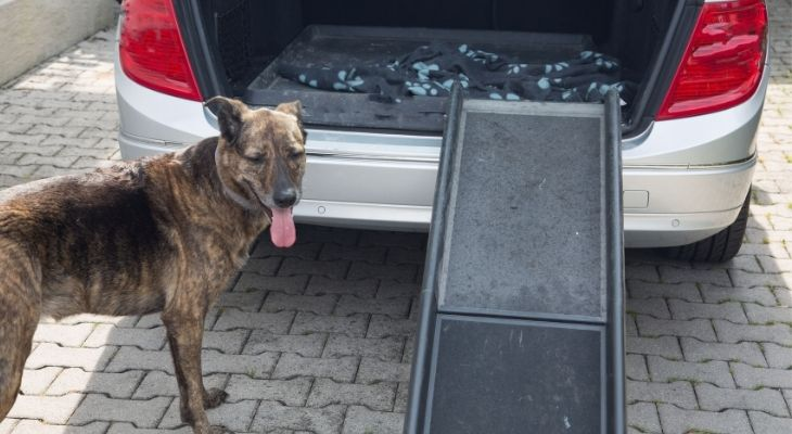 Dog Ramps for Car